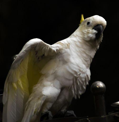 parrot bird white