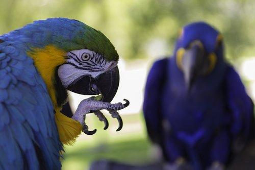 parrot  bird  exotic