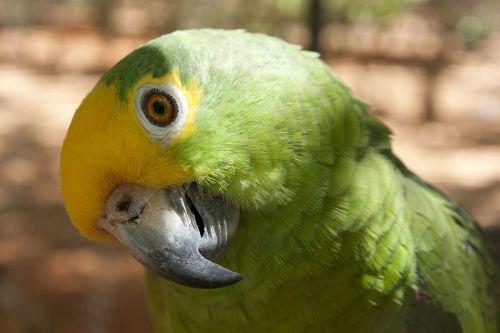 parrot ave bird
