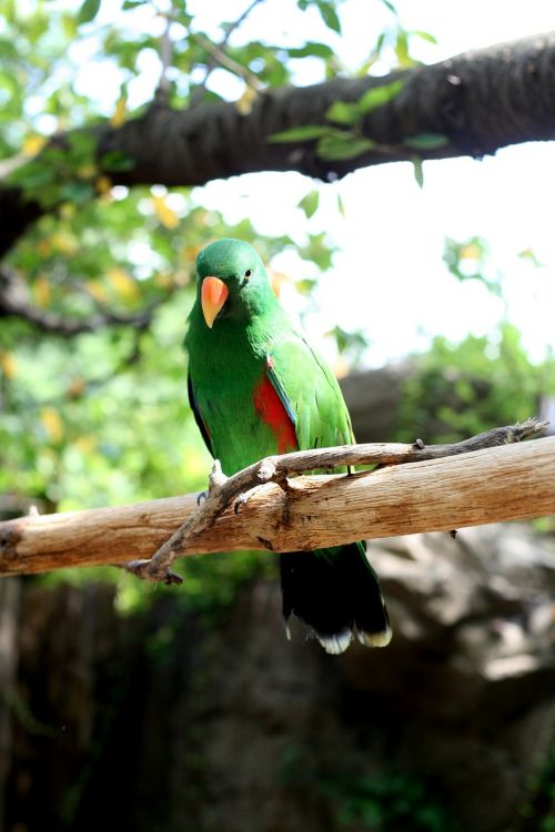 parrot,everland,new,greenness