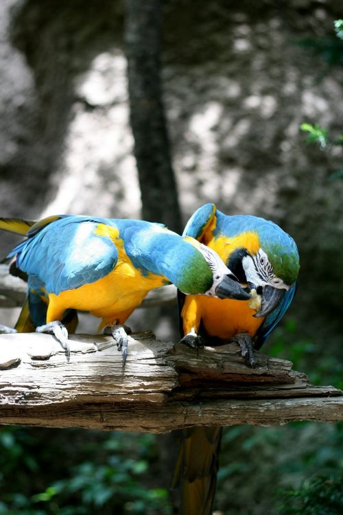 parrot everland couples