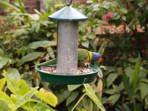 parrot bird feeding