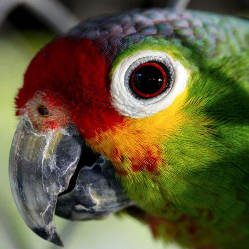 parrot ave captivity