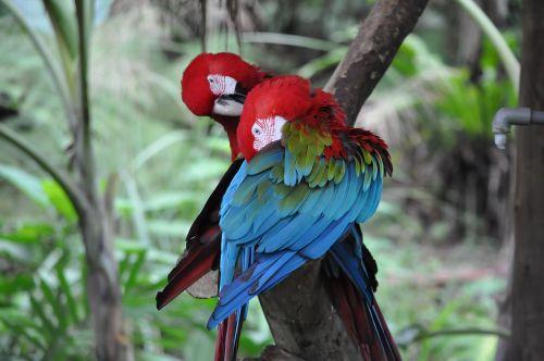 parrot birds pet
