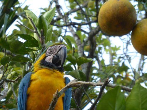 parrot landscape wonder