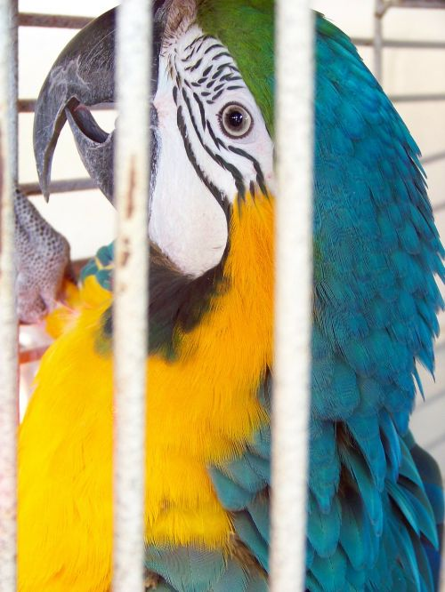 parrot bird animal