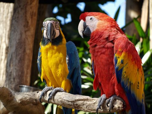 parrots colorful nature