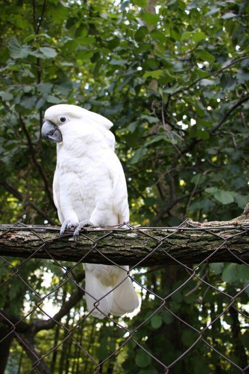 parrots kakadu bird