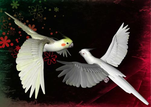 parrots birds animal