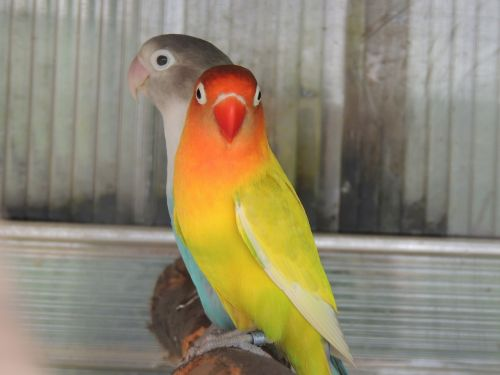 parrots captivity bird