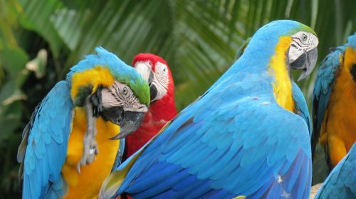 parrots cambodia birds