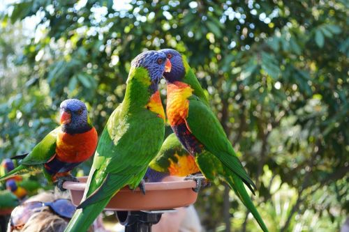 parrots birds animals