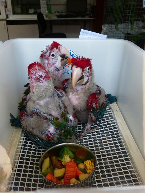parrots parrot breeding parrot breeding station