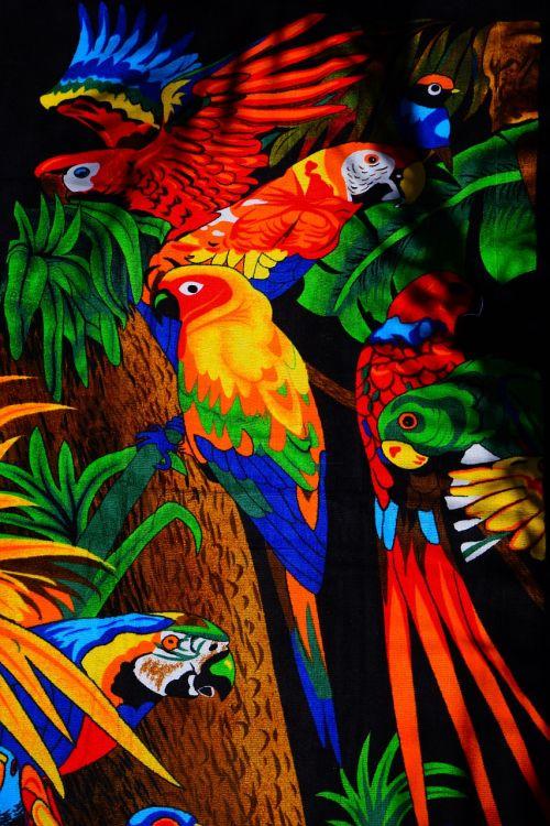 parrots aras lori