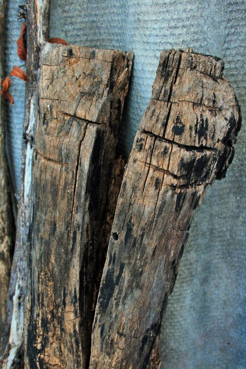 Partially Burnt Wood