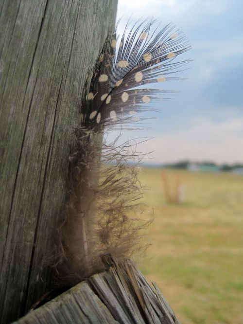 Partly Ruffled Feather