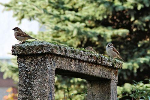 passage moss birds