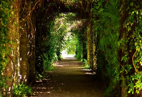 passage trees romantic