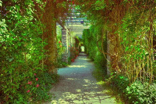 passage  overgrown  romantic
