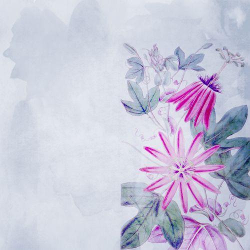 Passion Flowers Watercolor Paper