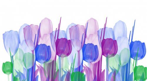 Pastel Tulips Background