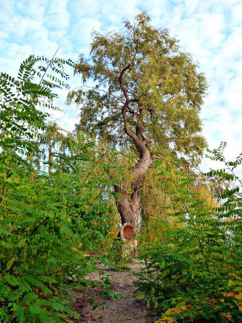 pasture high tree blue sky
