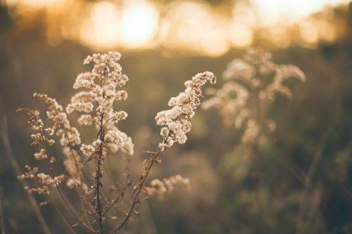 pasture grass herbage