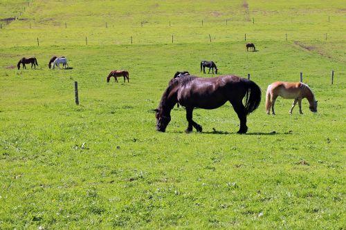 pasture horses horse pasture