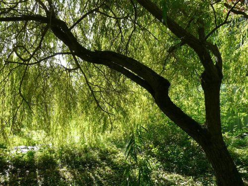pasture tree depend