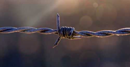 pasture fence barbed wire fencing
