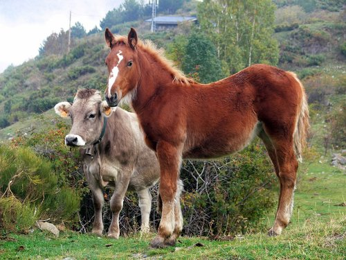 pastures  horse  animals