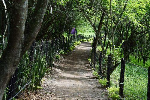 kelias,takas,gamta,miškas,vaikščioti,vaikščioti,žalias,žygiai,Kolumbija,po atviru dangumi,medžiai,kraštovaizdis