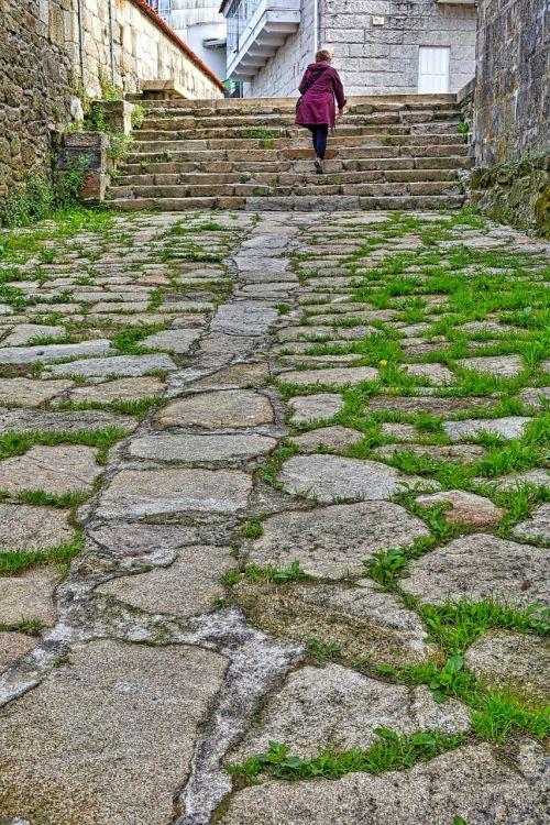 path grassy cobblestones