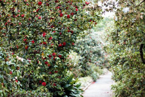 path walk greenery