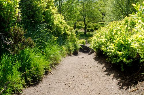 kelias, kelias, kelionė, tamsi, mistinis, miškas, medis, medžiai, filialas, filialai, šešėlis, liūdnas, juoda, balta, kraštovaizdis, gamta, sezonai, kelias