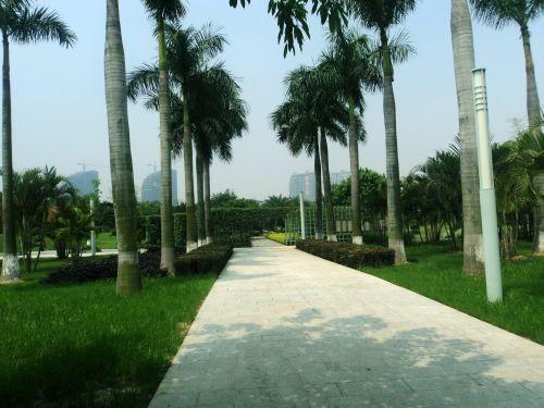 kelias, žalias, žalia žolė, kelias, vaikščioti, augalai, medžiai, kelias