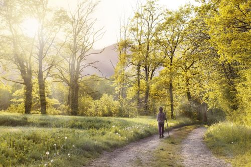 path andar field