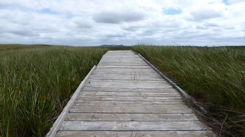 path journey nature