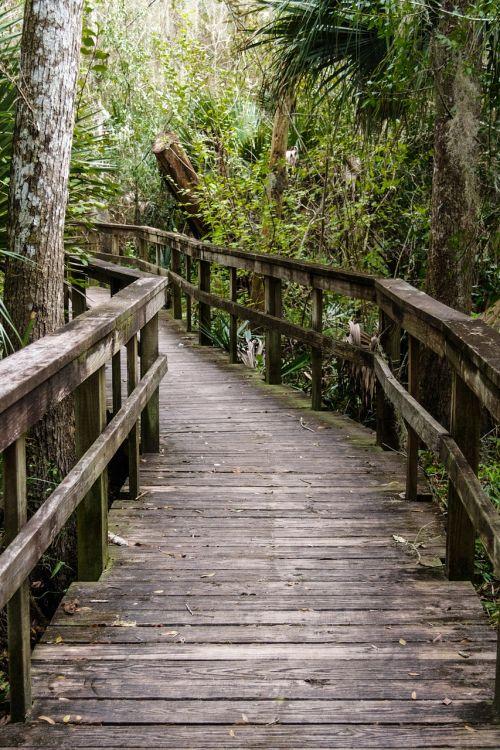 kelias,tiltas,gamta,kelias,miškas,žalias,kelias,perėjimas,natūralus,vaikščioti,mediena,geležinkelis