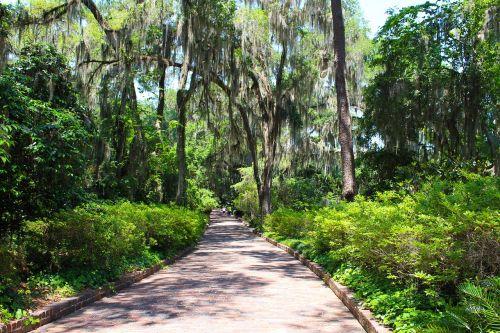 path brick trees