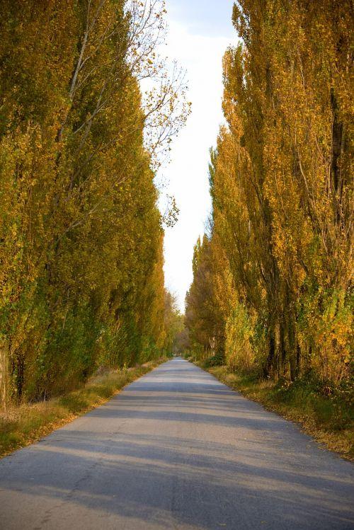 path infinity nature