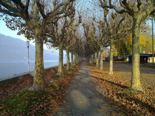 path promenade nature
