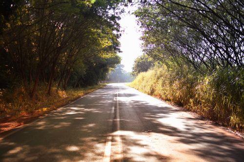 kelias,asfaltas,juostos,greitkelis,gamta,kelias,žalias,karštas kelias