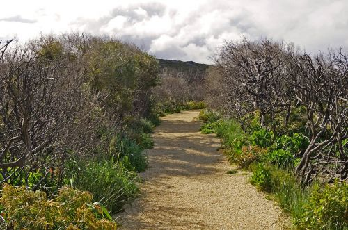 path bush nature
