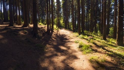 kelias,miškas,miško kelias,gamta,bohemija,šviesa,šešėlis,takas