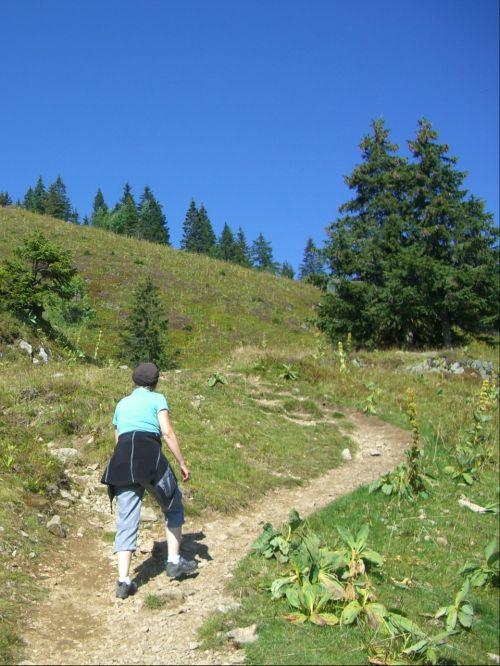 path migratory path tight wadeln