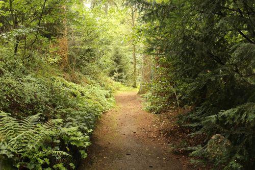 kelias,kelias,šviesa,medžiai,kelias,kelias,kelionė,kryptis,medis,tirpalas,gamta,galimybė,sprendimas,sėkmė,pasiekimas,žalias,kraštovaizdis,lauke,lauke,natūralus,nuotraukos,miškas,vaizdingas,scena,sezonas,šviesus,diena,spalvinga,vasara