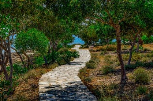 path  coastal  trees