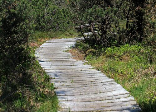 path wooden track away