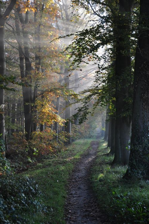 path forest trees